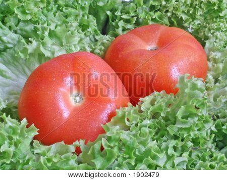 Tomato Paprika In Lettuce
