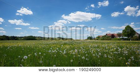 Field With Dandelion And Buttercups At The Outskirts Of Town