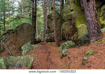 rugged trail through castle mound pine forest of black river state forest in jackson county wisconsin