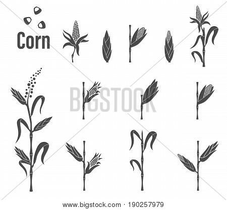 Corn Stems. Vegetarian cuisine vegetable and agriculture ripe harvest. Vector emblem of farm corncob or corn ear with leaves. Vector emblem of farm corncob or corn ear with leaves.