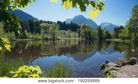 moor pond in allgau near oberstdorf view through maple branches