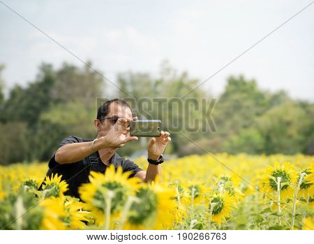 Asian middle aged man in black t-shirt with sunglasses taking photo of sunflower field with smart phone.Travel and technology concept.Focus on hand holding cellphone capture yellow flowers. Copy space