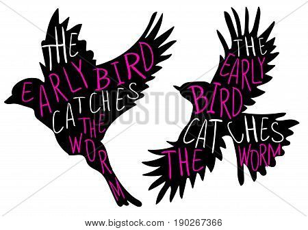 The early bird catches the worm. Hand written proverb, stylized VECTOR silhouette of the bird. Black bird, magenta and white words.