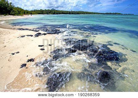 Beach Ile Du Cerfs Seaweed  Indian
