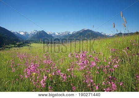Beautiful Alpine Landscape With Wildflower Meadow, Oberstdorf