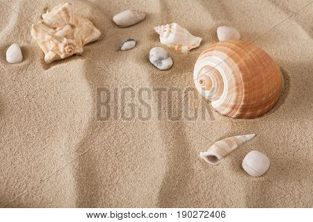 Sea beach sand background with seashells. Natural seashore textured surface