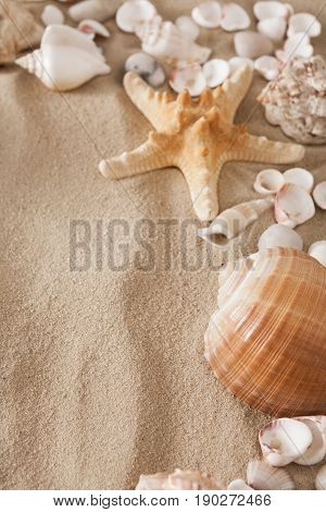 Sea beach sand background with seashells and starfish. Natural seashore textured surface, vertical