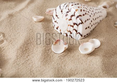 Seashore beach sand background with exotic seashells and starfish top view. Natural sandy texture