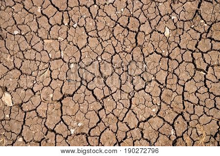 Dry brown earth, thirsty land, close up
