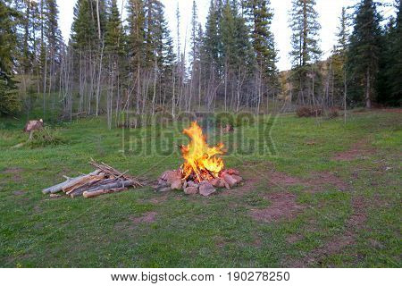 Campfire in the woods in Durango, CO