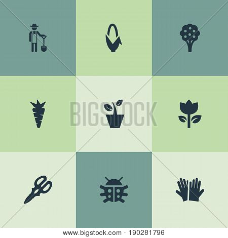 Vector Illustration Set Of Simple Horticulture Icons. Elements Apple Timber, Root, Blossom And Other Synonyms Insect, Shear And Leaf.
