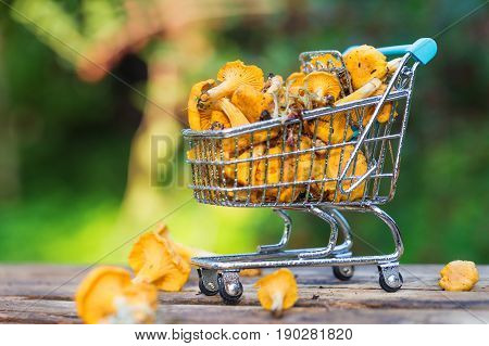 Heap of fresh yellow forest chanterelle mushrooms in market basket on wooden background