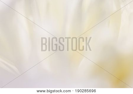 White background from flowers. White background from flowers