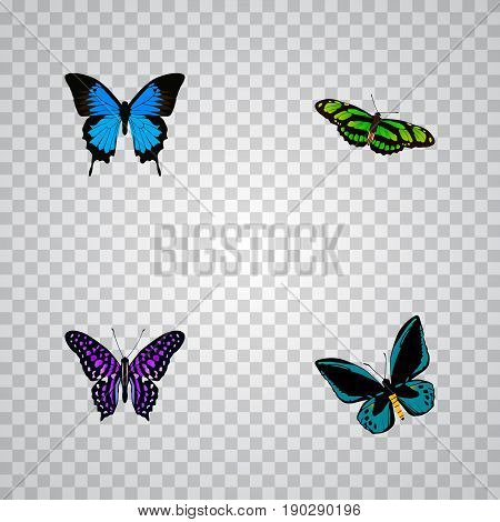 Realistic Polyommatus Icarus, Green Peacock, Common Blue And Other Vector Elements. Set Of Moth Realistic Symbols Also Includes Butterfly, Blue, Cypris Objects.