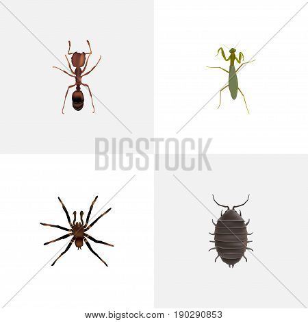 Realistic Dor, Arachnid, Grasshopper And Other Vector Elements. Set Of Bug Realistic Symbols Also Includes Beetle, Bug, Arachnid Objects.