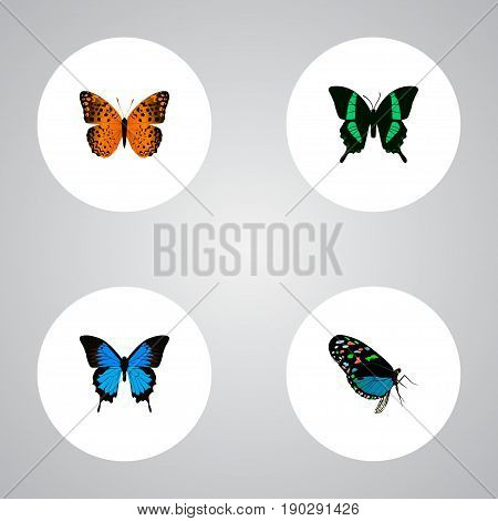 Realistic Common Blue, Danaus Plexippus, Hairstreak And Other Vector Elements. Set Of Beauty Realistic Symbols Also Includes Blue, Tropical, Monarch Objects.