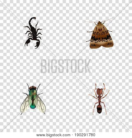 Realistic Poisonous, Butterfly, Emmet And Other Vector Elements. Set Of Bug Realistic Symbols Also Includes Insect, Scorpion, Poisonous Objects.