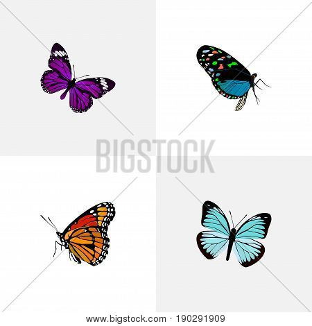 Realistic Hairstreak, Lexias, Milkweed And Other Vector Elements. Set Of Moth Realistic Symbols Also Includes Blue, Beautiful, Sky Objects.