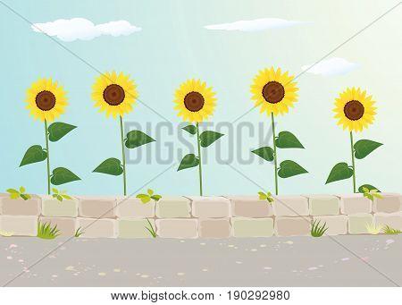 Sunflower view near roadside stock vector background