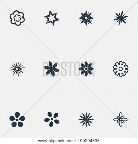 Vector Illustration Set Of Simple Rose Icons. Elements Apple Blossom, Decoration, Sword Lily And Other Synonyms Marguerite, Blossom And Floral.