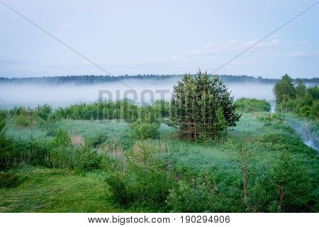 Fogy forest in the evening low light