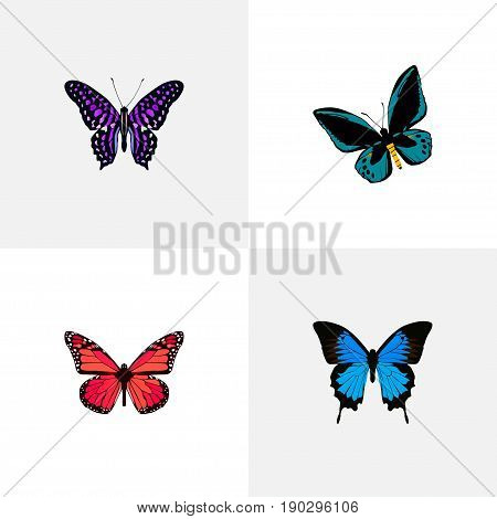 Realistic Demophoon, Common Blue, Azure Peacock And Other Vector Elements. Set Of Beauty Realistic Symbols Also Includes Pink, Purple, Blue Objects.
