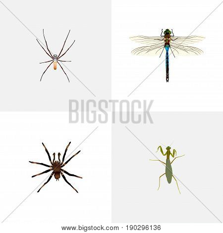 Realistic Spider, Grasshopper, Arachnid And Other Vector Elements. Set Of Insect Realistic Symbols Also Includes Damselfly, Mantis, Spider Objects.