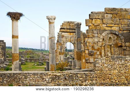 Volubilis  Morocco Africa The Stork Nest