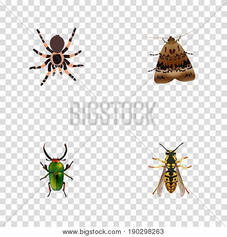 Realistic Bee, Tarantula, Butterfly And Other Vector Elements. Set Of Bug Realistic Symbols Also Includes Green, Spider, Beetle Objects.