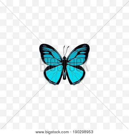 Realistic Papilio Ulysses Element. Vector Illustration Of Realistic Sky Animal Isolated On Clean Background. Can Be Used As Butterfly, Bluewing And Blue Symbols.