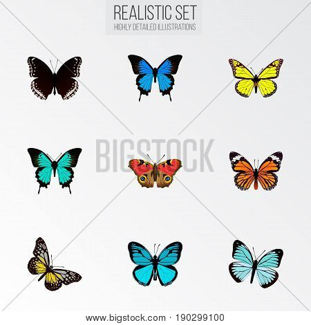 Realistic Summer Insect, Sky Animal, Spicebush And Other Vector Elements. Set Of Beauty Realistic Symbols Also Includes Sky, Black, Hypolimnas Objects.