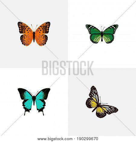 Realistic Copper, Summer Insect, Danaus Plexippus And Other Vector Elements. Set Of Beauty Realistic Symbols Also Includes Orange, Butterfly, Yellow Objects.