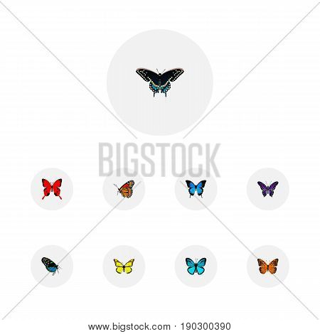 Realistic Milkweed, Sky Animal, Hairstreak And Other Vector Elements. Set Of Butterfly Realistic Symbols Also Includes Blue, Yellow, Julia Objects.