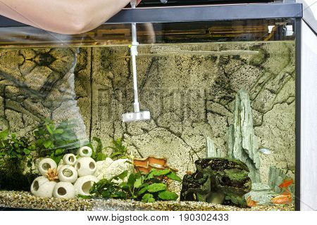 Young woman cleaning aquarium using scraper at home.
