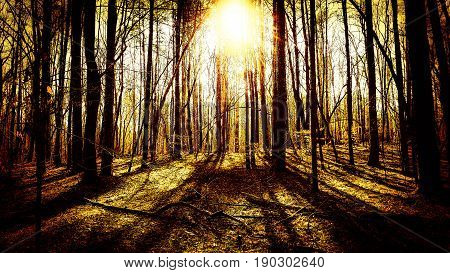 A dark forest with shadowy trees and the sun shining through.