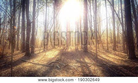 A cluster of shadowy trees in the woods with bright sun glare.