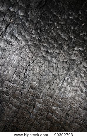 Abstract background texture of naturally burned redwood tree.
