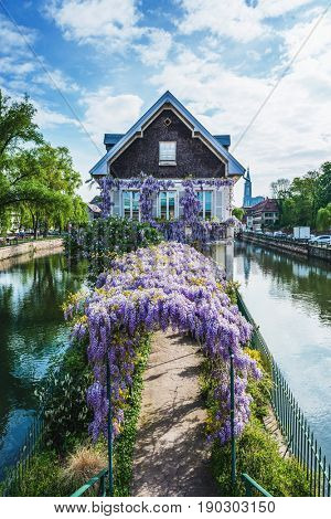Springtime in Petite France, Strasbourg, Alsace with a tranquil picturesque scene of an old canal house on an island with colorful purple wisteria covering an arbor leading to the front door