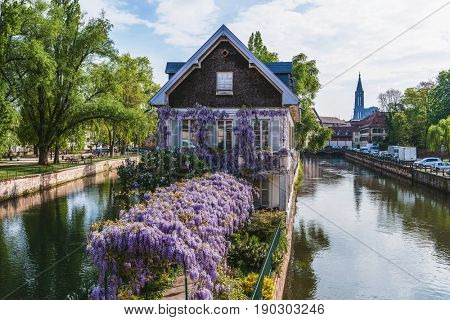 Picturesque house on a canal in Petite France in Strasbourg, France situated on a central island with a colorful purple flowering wisteria covered arbor leading to the front door