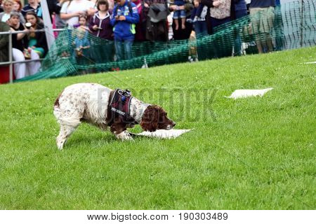 Beaulieu, Hampshire, Uk - May 29 2017: Fire Dog Of The Hampshire Arson Task Force Searching For Comb