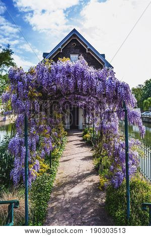 Pretty purple flowering wisteria covering an arched arbor leading to an old house on a canal island in Petite France, Strasbourg, Alsace, France