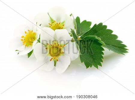 Three strawberry flowers isolated on white background