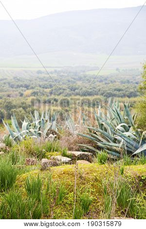 Volubilis In Morocco Africa The Old Agave