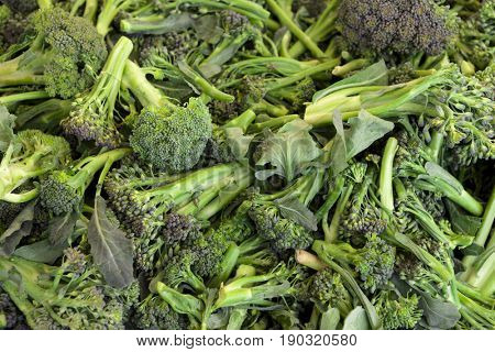 Green, fresh, juicy shoots of broccoli closeup. Broccoli background