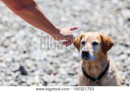 Female Hand Gives Command To A Dog