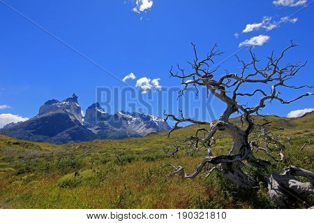 Cuernos Paine Grande, Torres Del Paine National Park, Patagonia, Chile, Southamerica