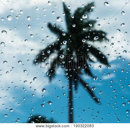 palm tree reflected in rain drops on a window