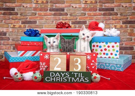 Two fluffy white and one gray kitten popping out of a pile of presents small santa hats toy mice and count down to Christmas blocks. Red fuzzy carpet brick wall background. 23 days til Christmas