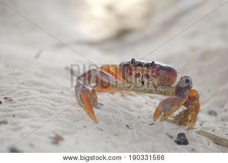 Extreme close-up image of crab exploring the beach