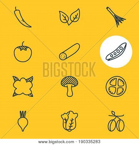 Vector Illustration Of 12 Vegetables Icons. Editable Pack Of Beet, Tomato Slice, Cucumber And Other Elements.